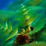 Palau_006